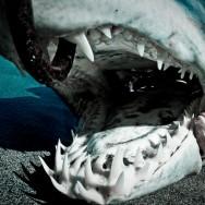 Szczęka rekina
