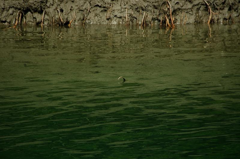Wąż wodny w Indiach